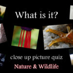What Is It?   Close Up Picture Quiz Game Hd (Family Quiz)