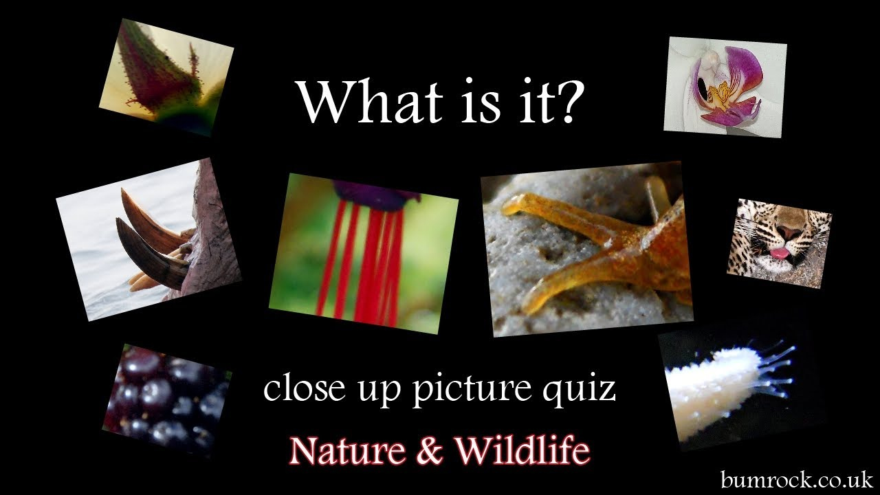 What Is It? - Close Up Picture Quiz Game Hd (Family Quiz)